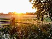 Setting sun over the marshes