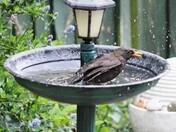 bird bath my back garden