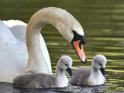 Young family at Needham Lake