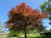 Treemedious Exmouth