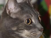 My Beautiful Mr Grey