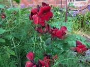 Lockdown flowers