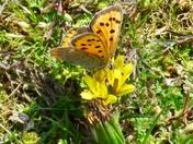 Pretty butterfly on flower