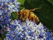 my back garden pollinators