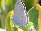 my back garden moth