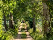 A Summer Walk at Burlingham