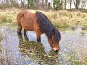 Pony paddle on roydon common