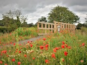 A path to the poppies