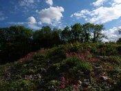 The Stonage Encampment  Worlebury