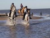 The horses enjoying the Easing of Lockdown