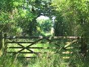 dappled sunlight on a gate
