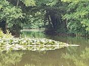 Gobions Wood, Brookmans Park