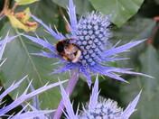 Pollen collection time