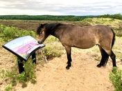 Checking out the info board to see if one of the wild species on roydon common