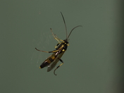 Waspy type fly?