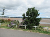 By the Estuary from Imperial Recreational Grounds