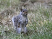 There's something special about squirrels