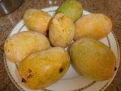 Fresh Indian Mangos