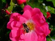 Taken in my wife's lovely garden in Felixstowe :)